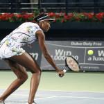 Venus bh volley